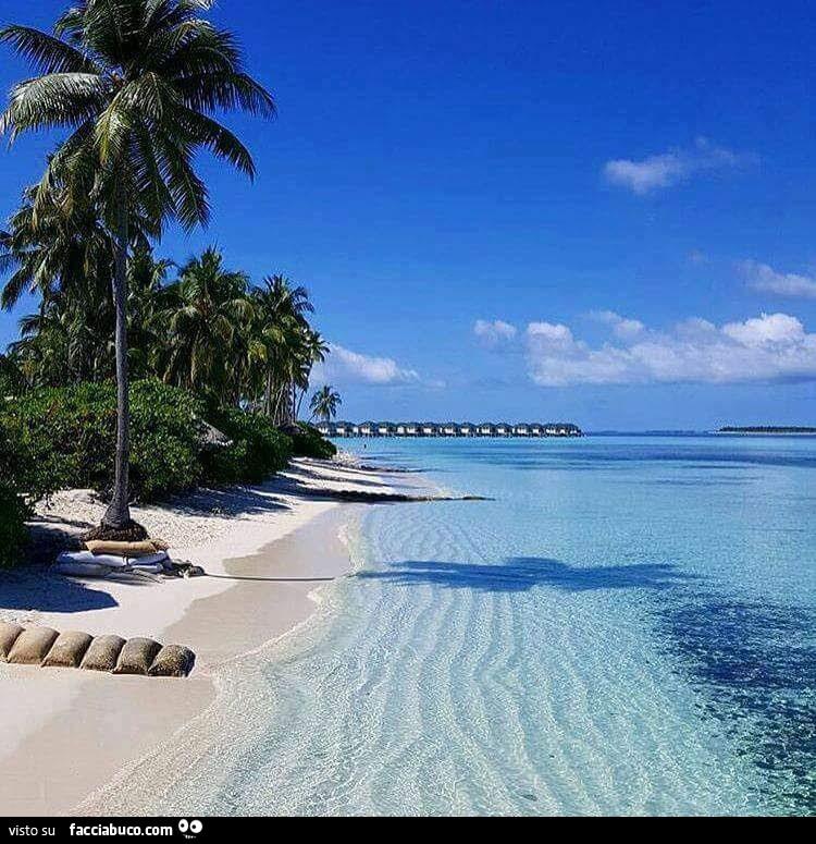 Spiaggia Con Palme E Mare Limpido Facciabuco Com