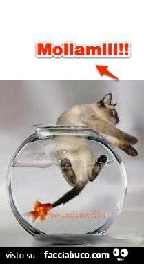Il pesce rosso morde la coda del gatto lasciami for La coda del gatto