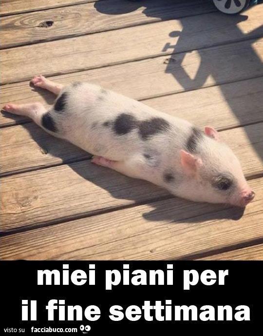 tutti i meme sui maiali