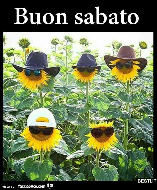 Girasoli con i cappelli buon sabato for Immagini sabato divertenti