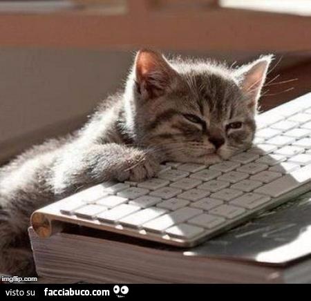 Gattino dorme sulla tastiera del computer - Tastiera del letto ...