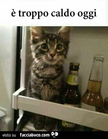 [Immagine: 9zxh82le2v-gatto-nel-frigo-troppo-caldo-..._a.jpg?c=1]